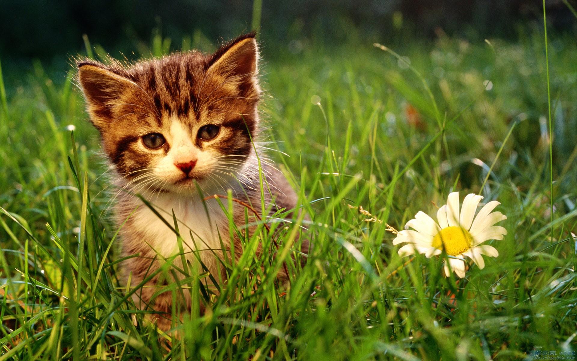 超萌~~~~可爱猫咪们的超萌照片哦,不看后悔哦