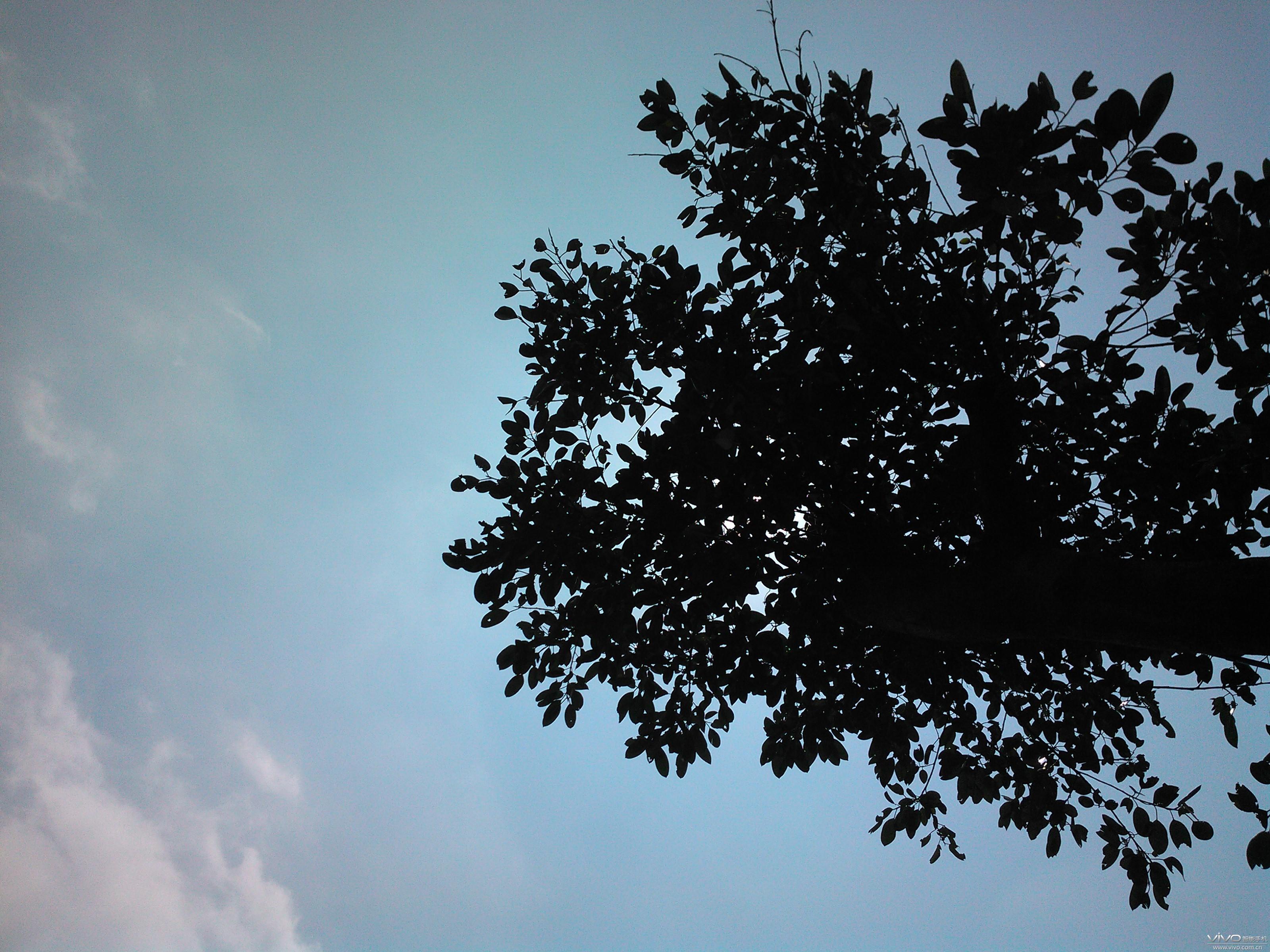 拍摄地点:广州海珠湖公园 拍摄时间:大概上午10点到12点之间 拍摄设备:vivo S1 拍摄尺寸:3200x2400像素 点评:S1 的逆光拍摄,依然如此给力!! ---------------------------------------------------------------------------- 这是一家茶店,古朴屋檐的一角,悬挂着的,是一串红灯笼,阳光直射而下,屋檐的轮廓更显清晰,随风飘荡的红灯笼,与天空的蓝色对比是那么的强烈。不知道为什么,看到灯笼上的茶字,我想到的不是茶,而是茶