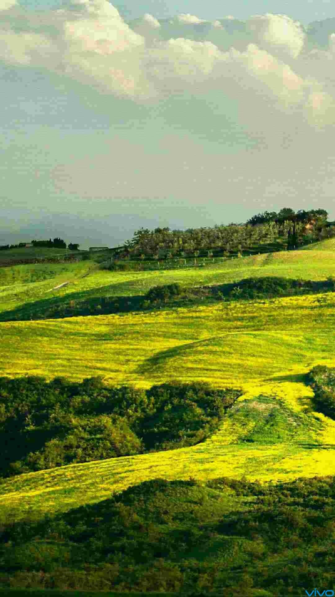 壁纸 成片种植 风景 植物 种植基地 桌面 1080_1920 竖版 竖屏 手机