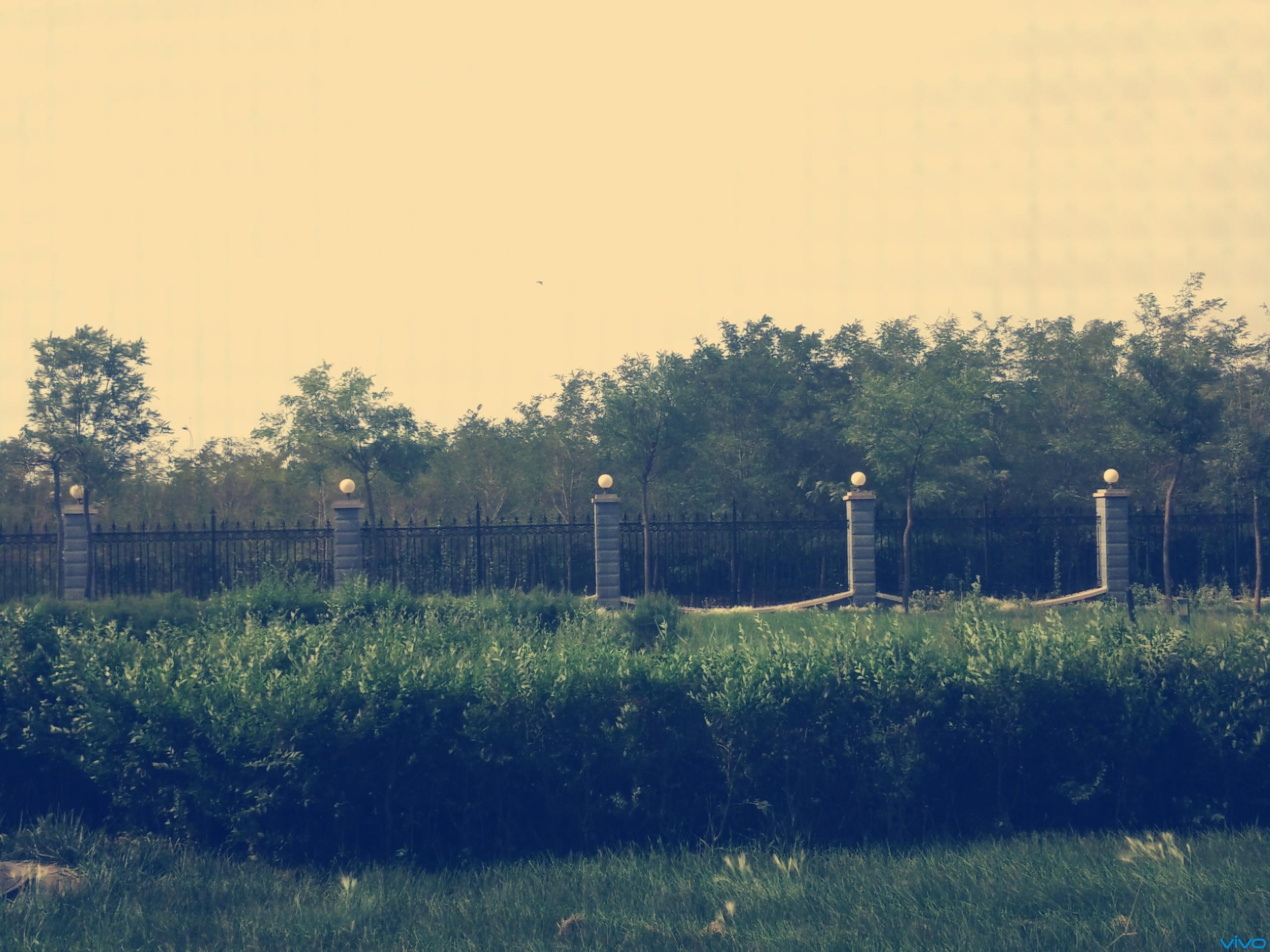篱笆外的风景