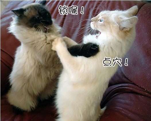 luckykiki 发表于 2015-7-2 09:33   喵星人是这个世界上最可爱的动物