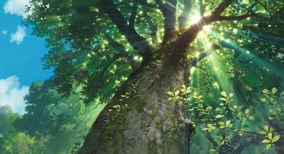 壁纸 风景 森林 桌面 406_220