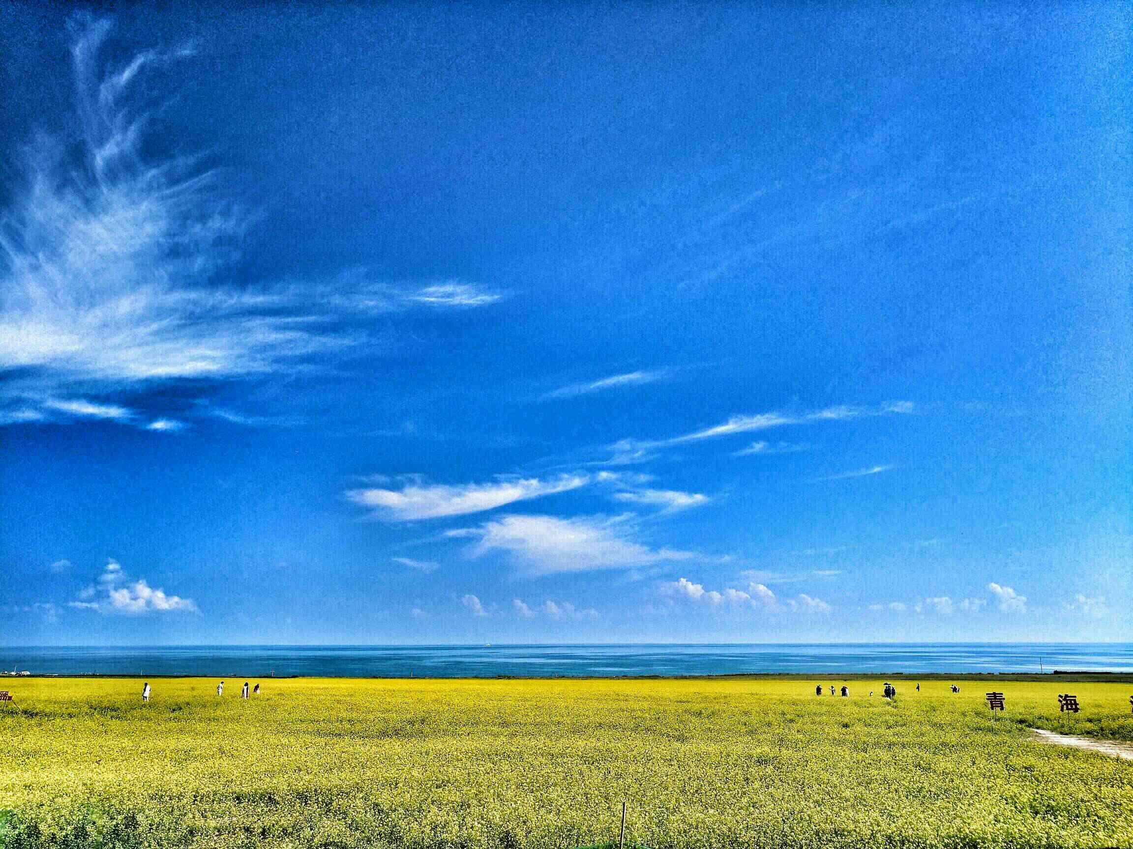 【x7plus】青海湖的夏天