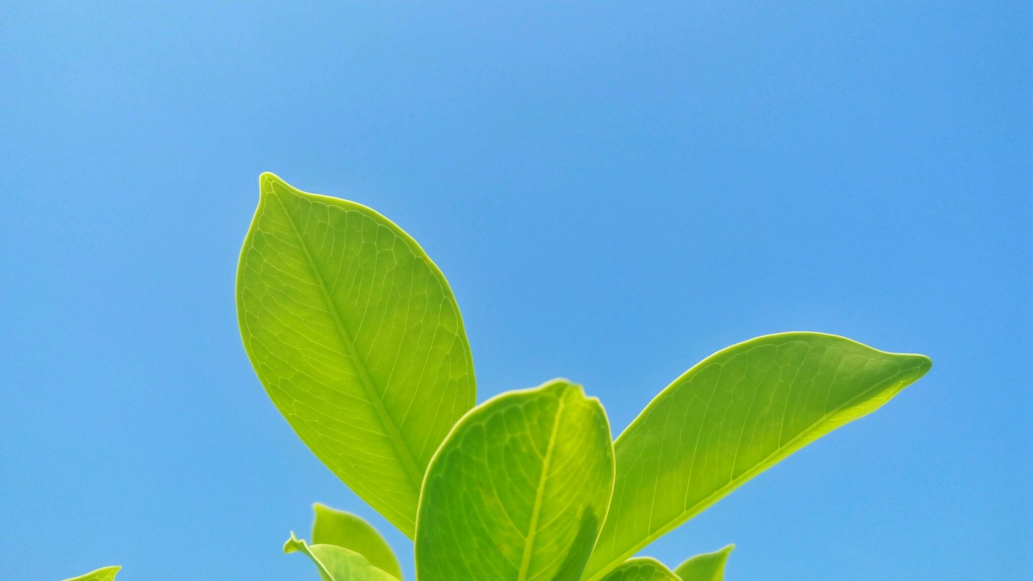 背景 壁纸 绿色 绿叶 树叶 植物 桌面 2048_1152