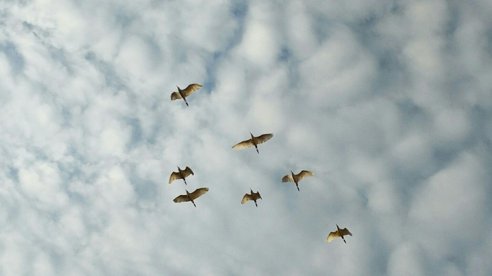 3dmax鸟天空贴图素材