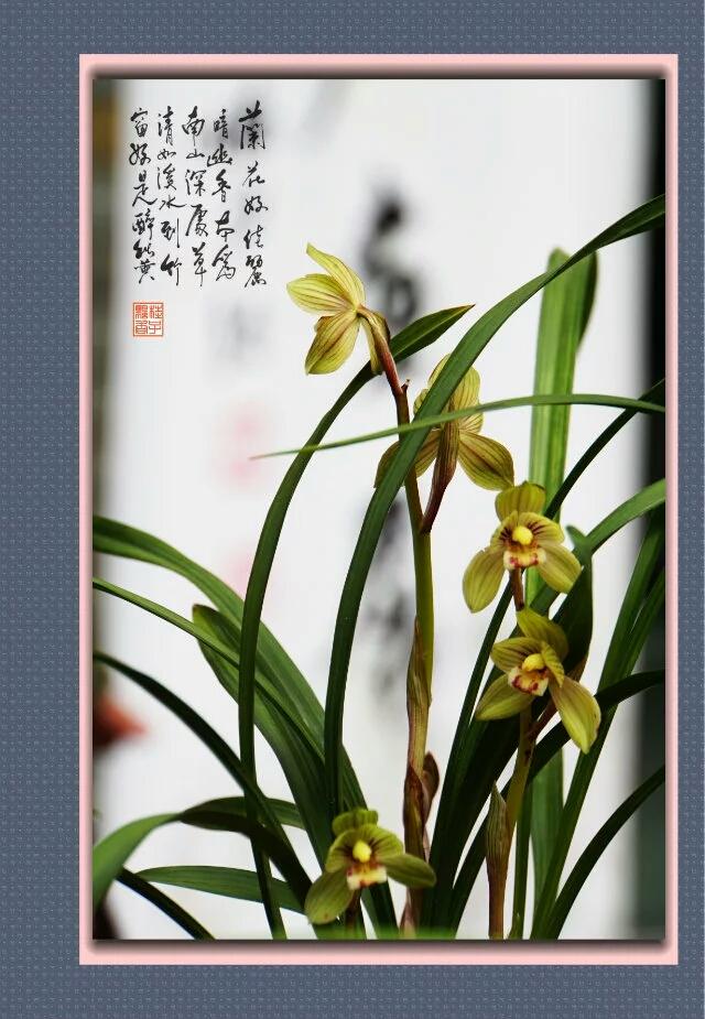 彩铅兰花的画法步骤