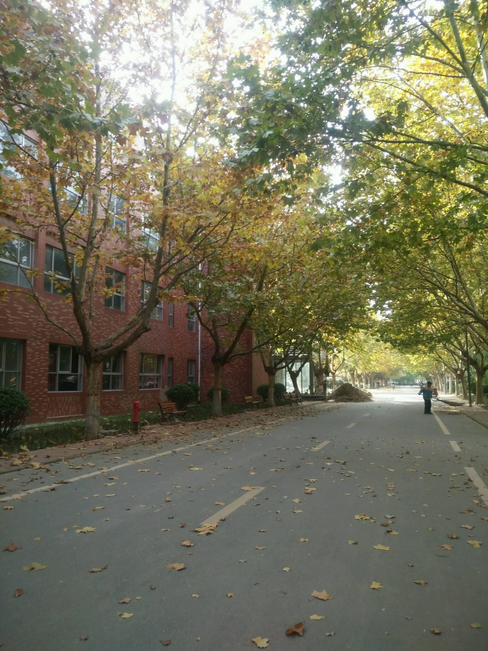 校园秋天的风景,落叶知秋