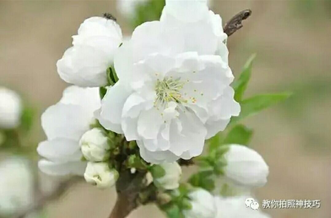 春天各种花卉的拍摄技巧图片