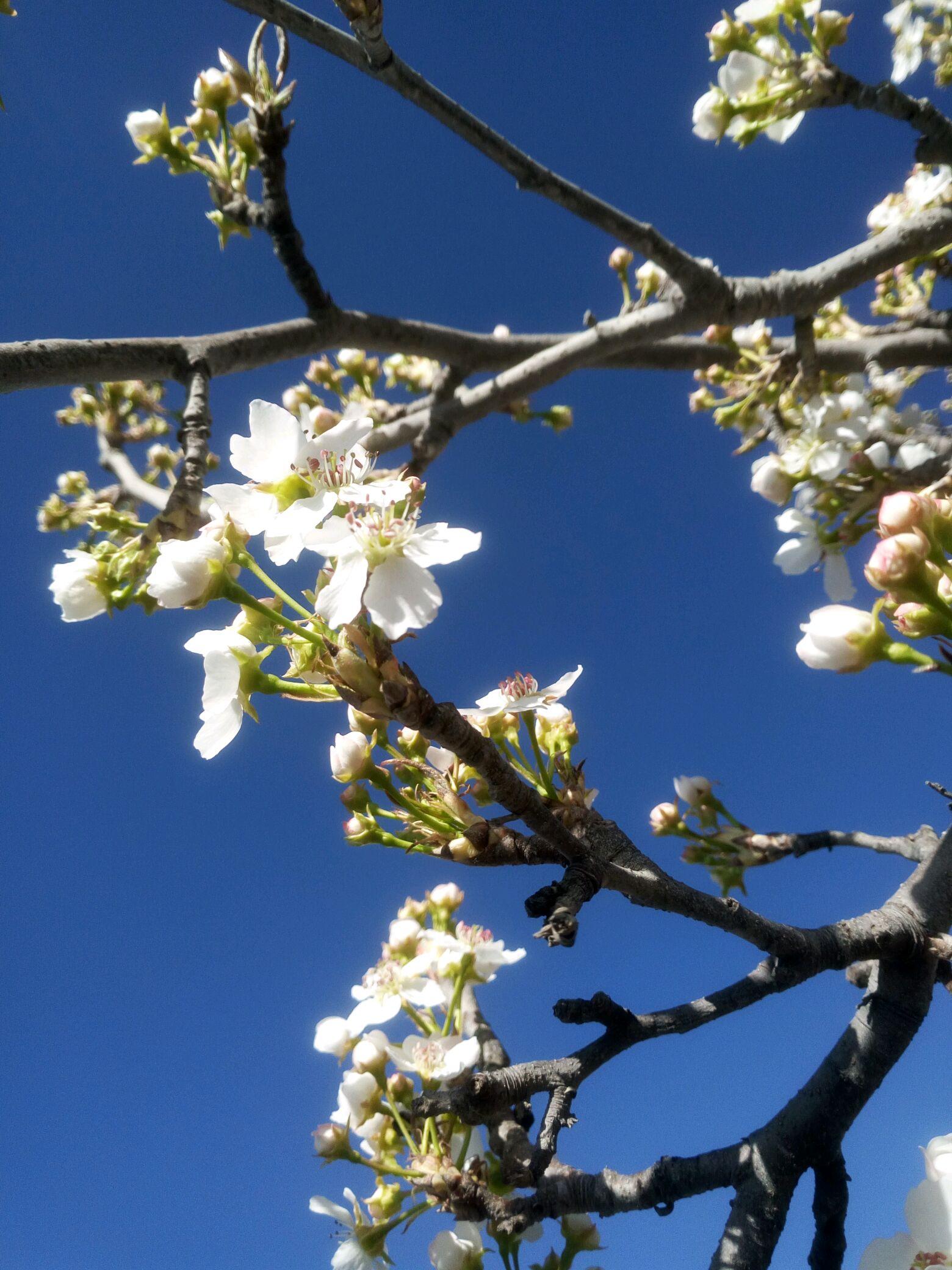 春天在哪里