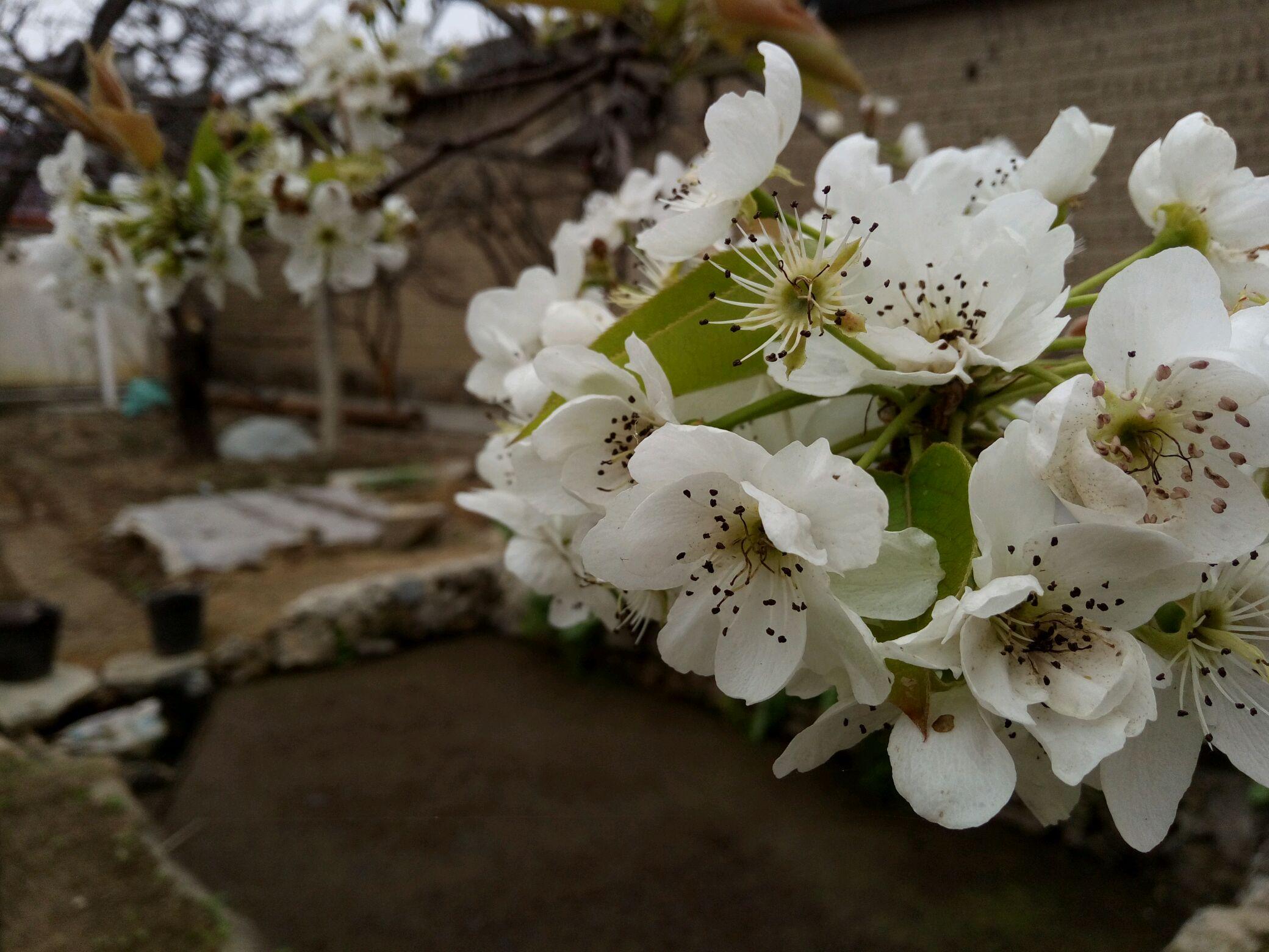 外婆的菜园