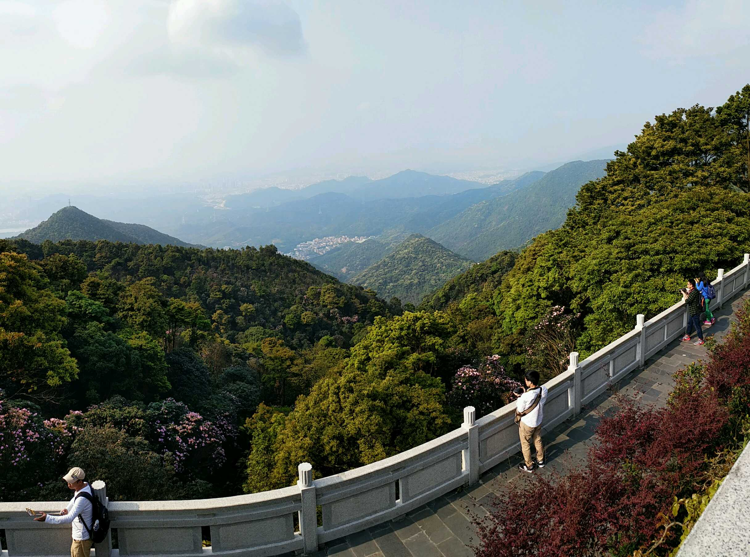 梧桐山风景