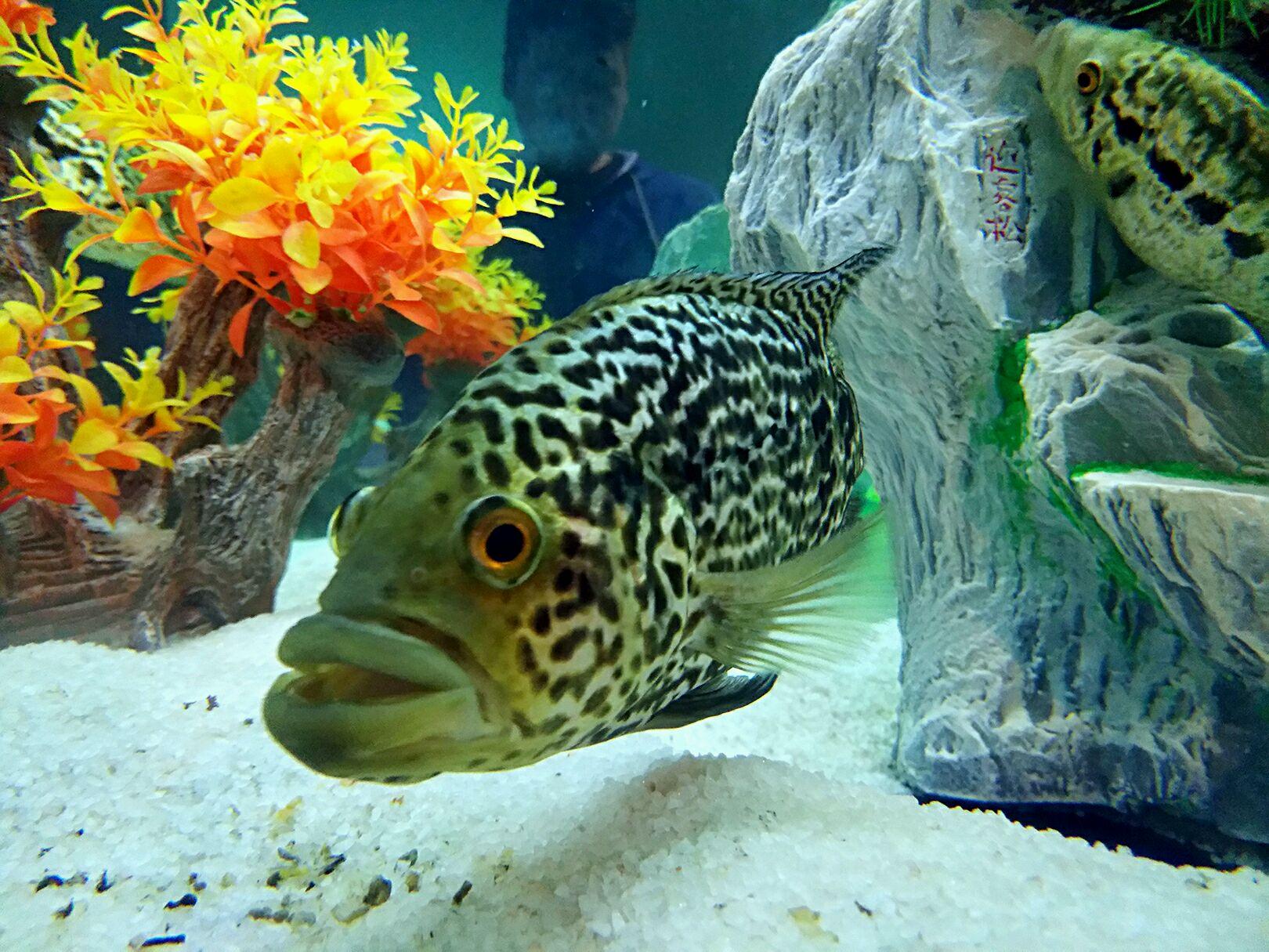 悉尼塔(含4d電影)+水族館+杜莎夫人蠟像館+動物世界圖片