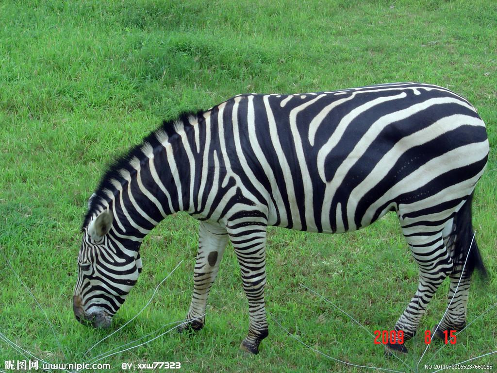 壁纸 动物 马 骑马 1024_768
