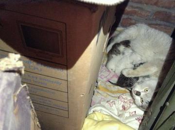【随拍故事会】墙角的小猫咪