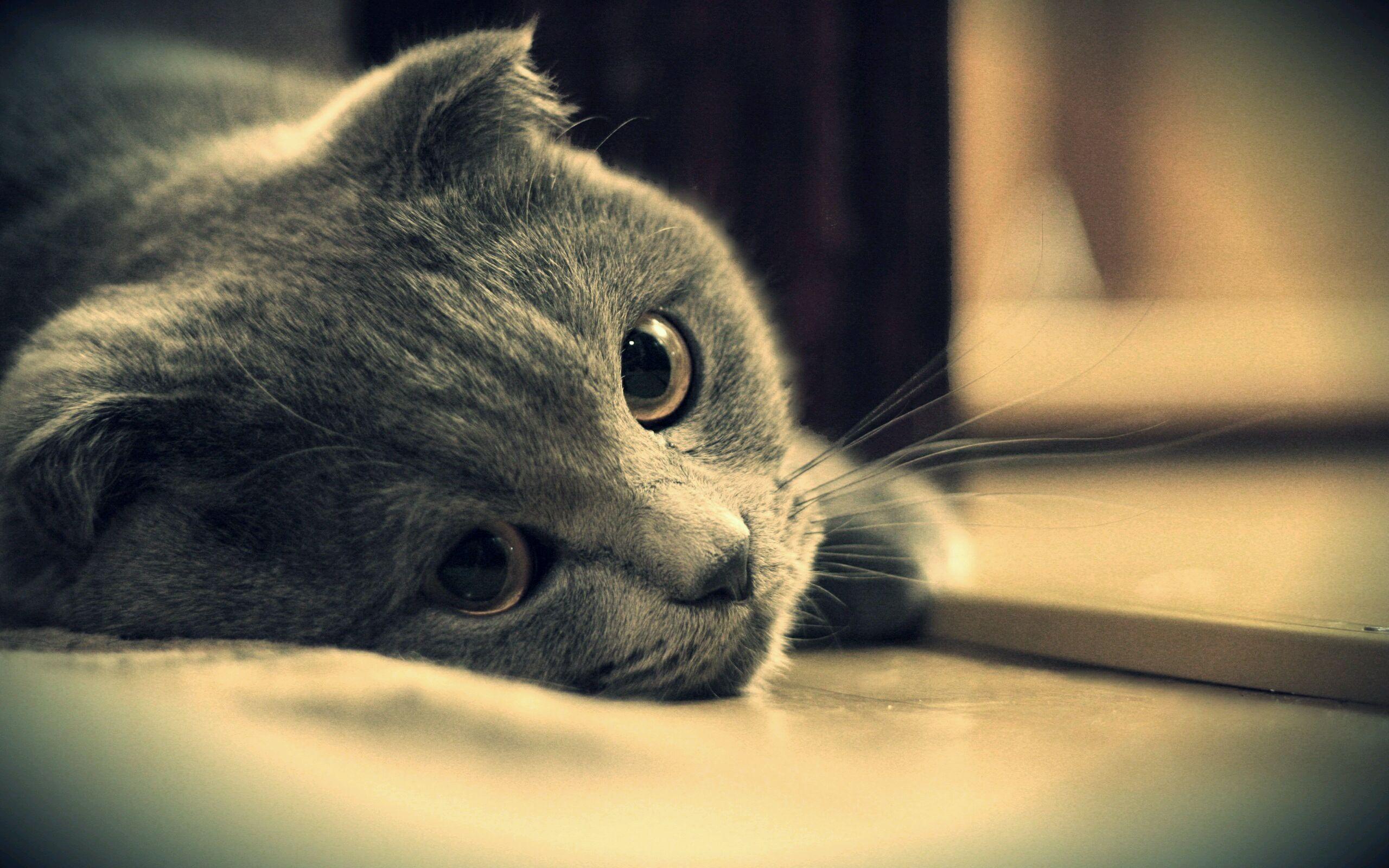 壁纸 动物 猫 猫咪 小猫 桌面 2560_1600
