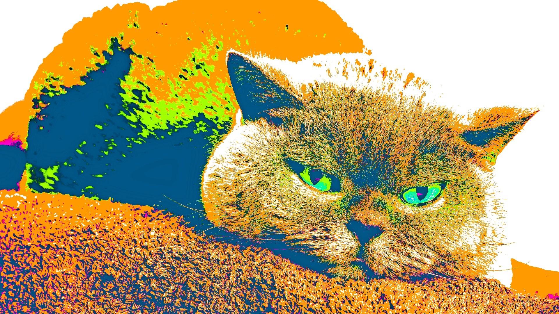 【v粉壁纸】小猫猫可爱卖萌壁纸【12p】