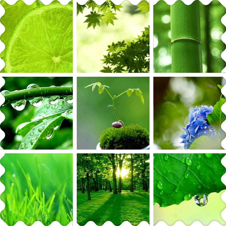 【资源组】1080*1920 绿色护眼手机壁纸