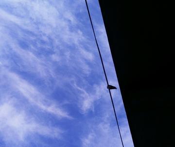 尾巴短短的小燕子
