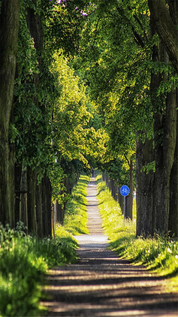 壁纸 风景 森林 桌面 720_1280 竖版 竖屏 手机