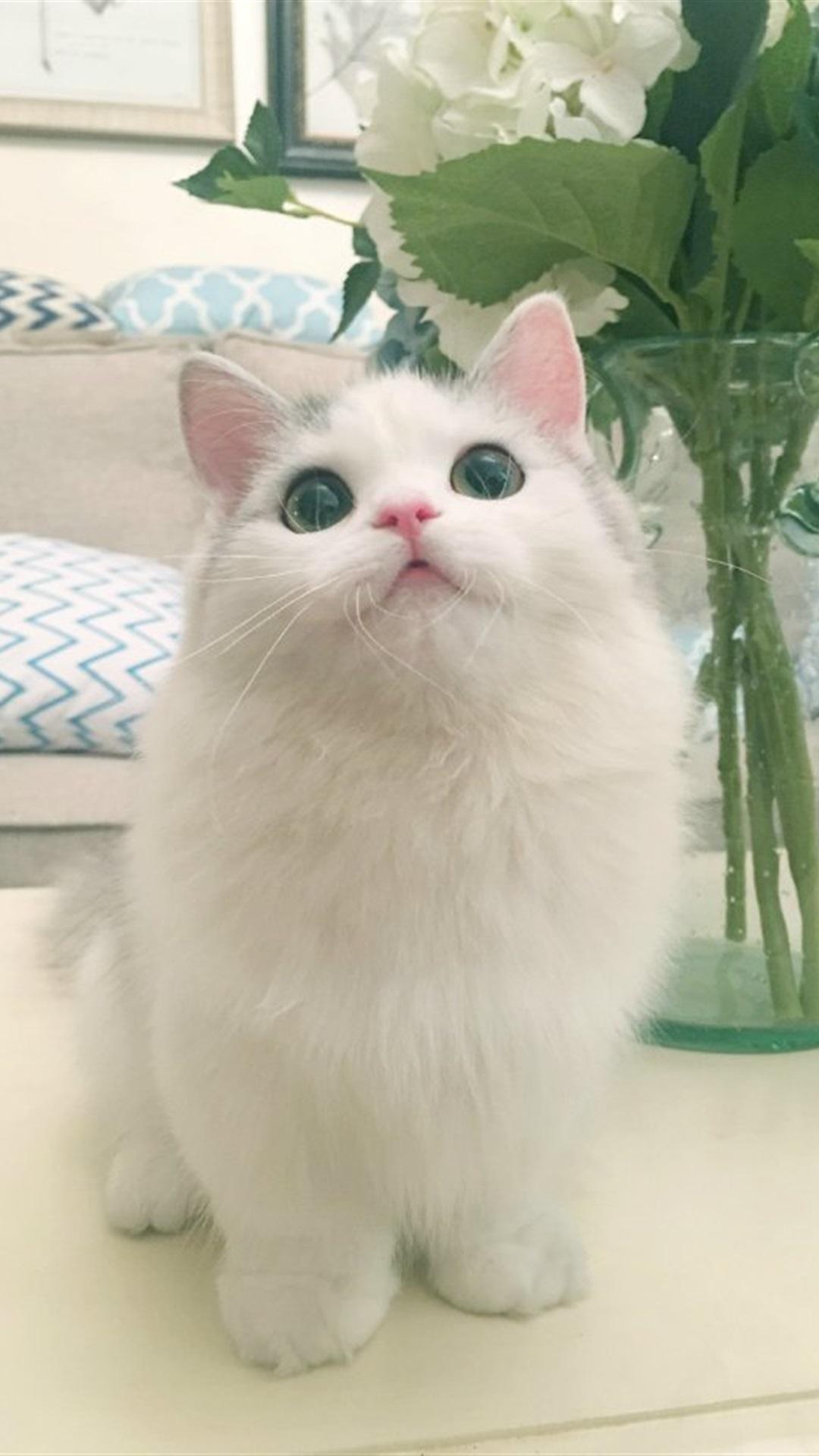【v粉壁纸】可爱小猫咪超萌手机壁纸