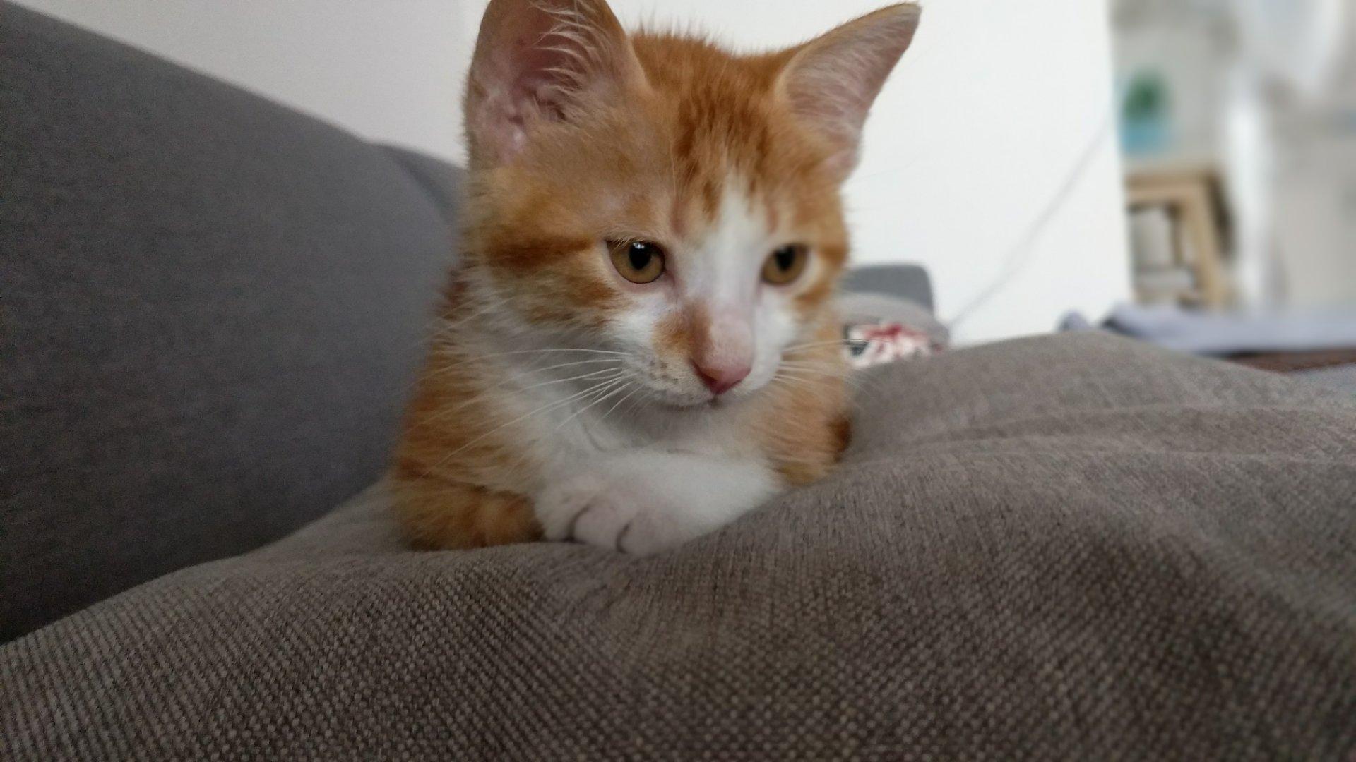 可爱的小花猫