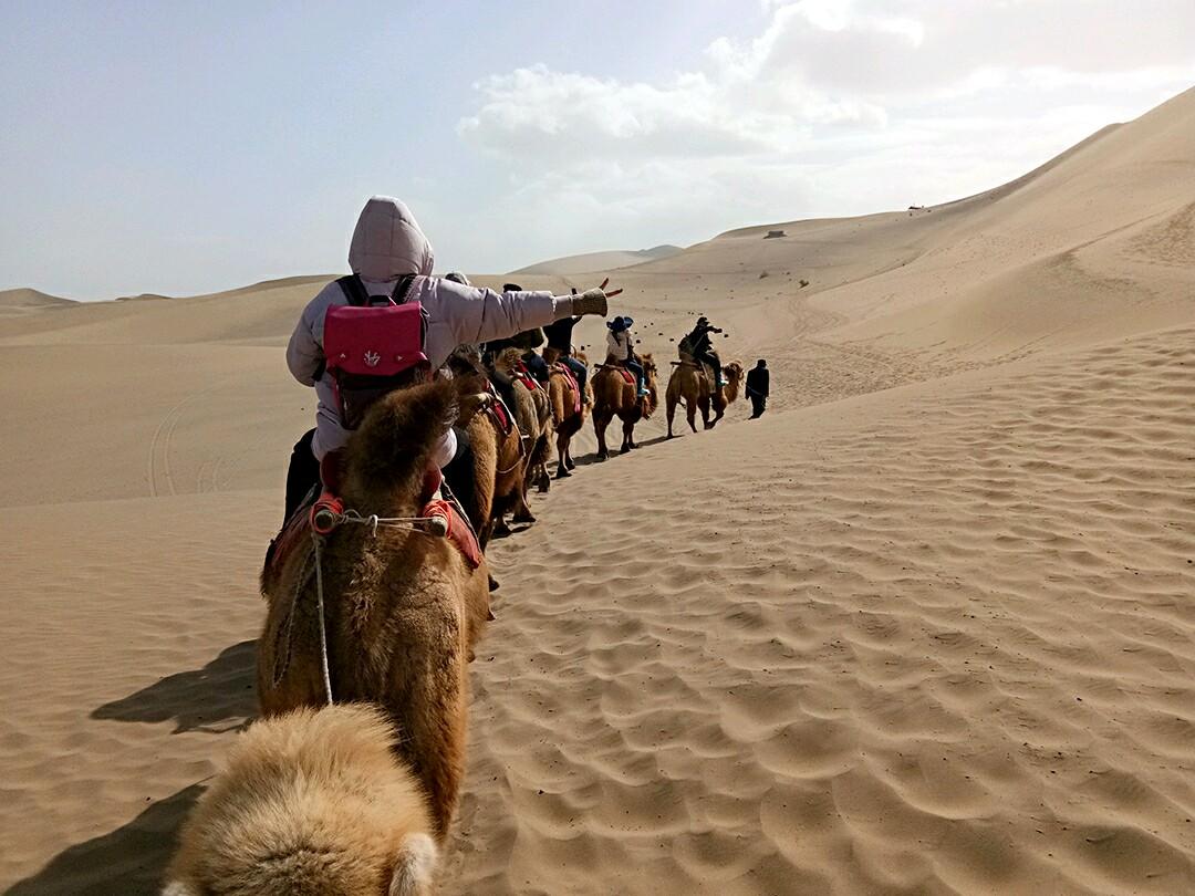 壁纸骆驼沙漠桌面1080_810