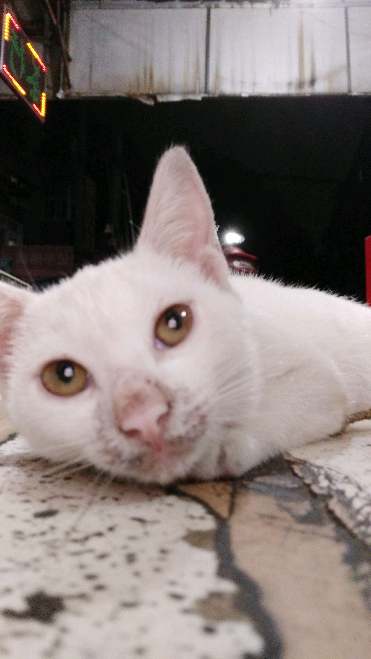 可爱的猫咪-手机摄影-vivo智能手机v粉社区