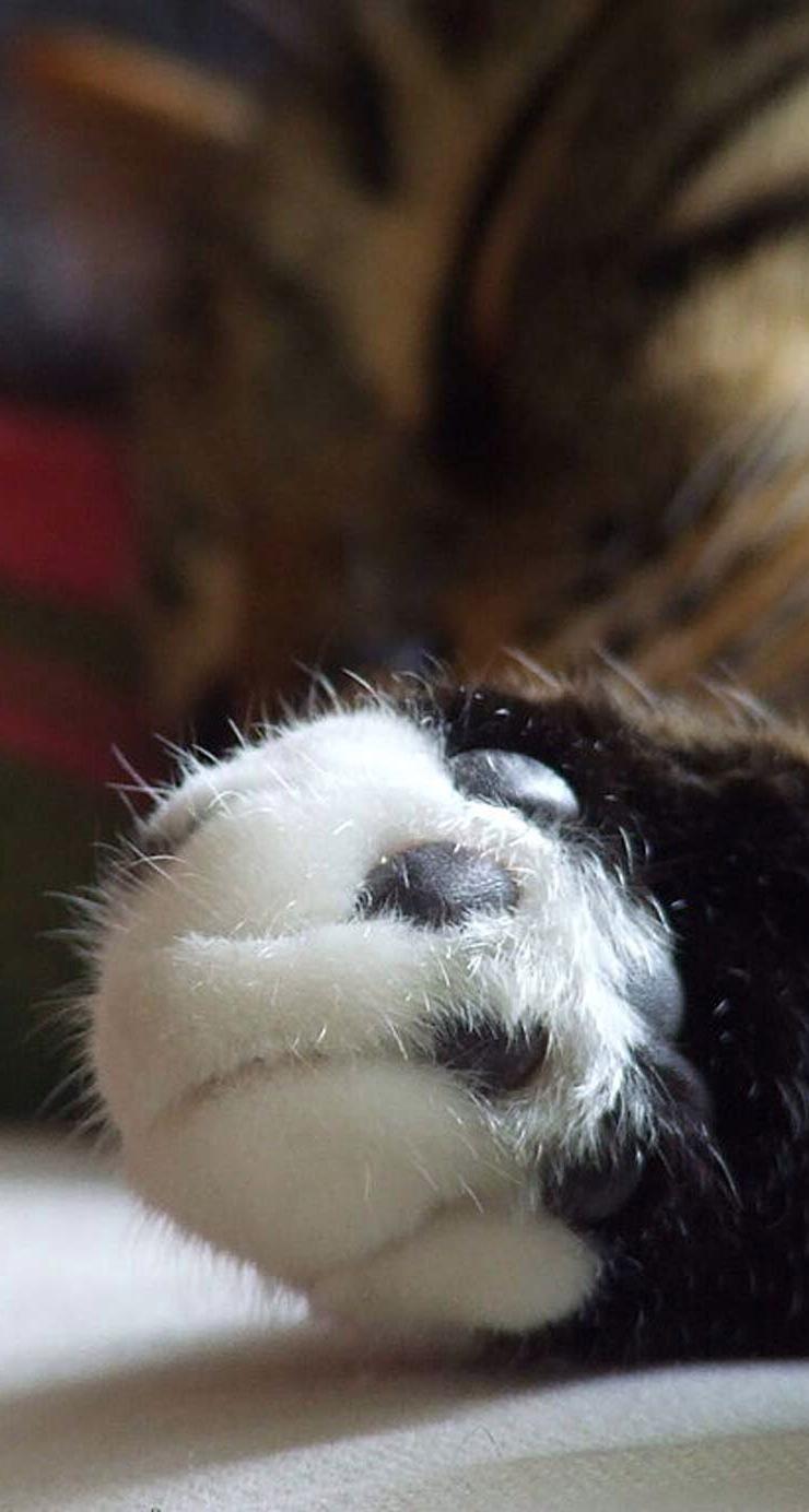 【v粉壁纸】萌宠小猫可爱高清手机壁纸3