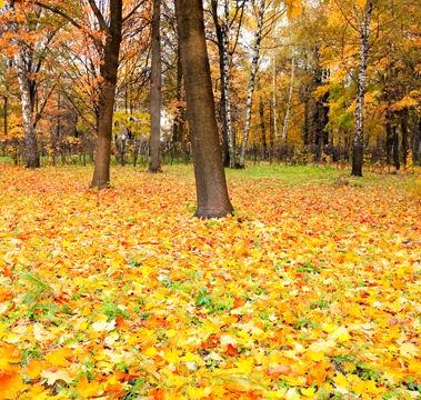 秋天落叶风景高清大图