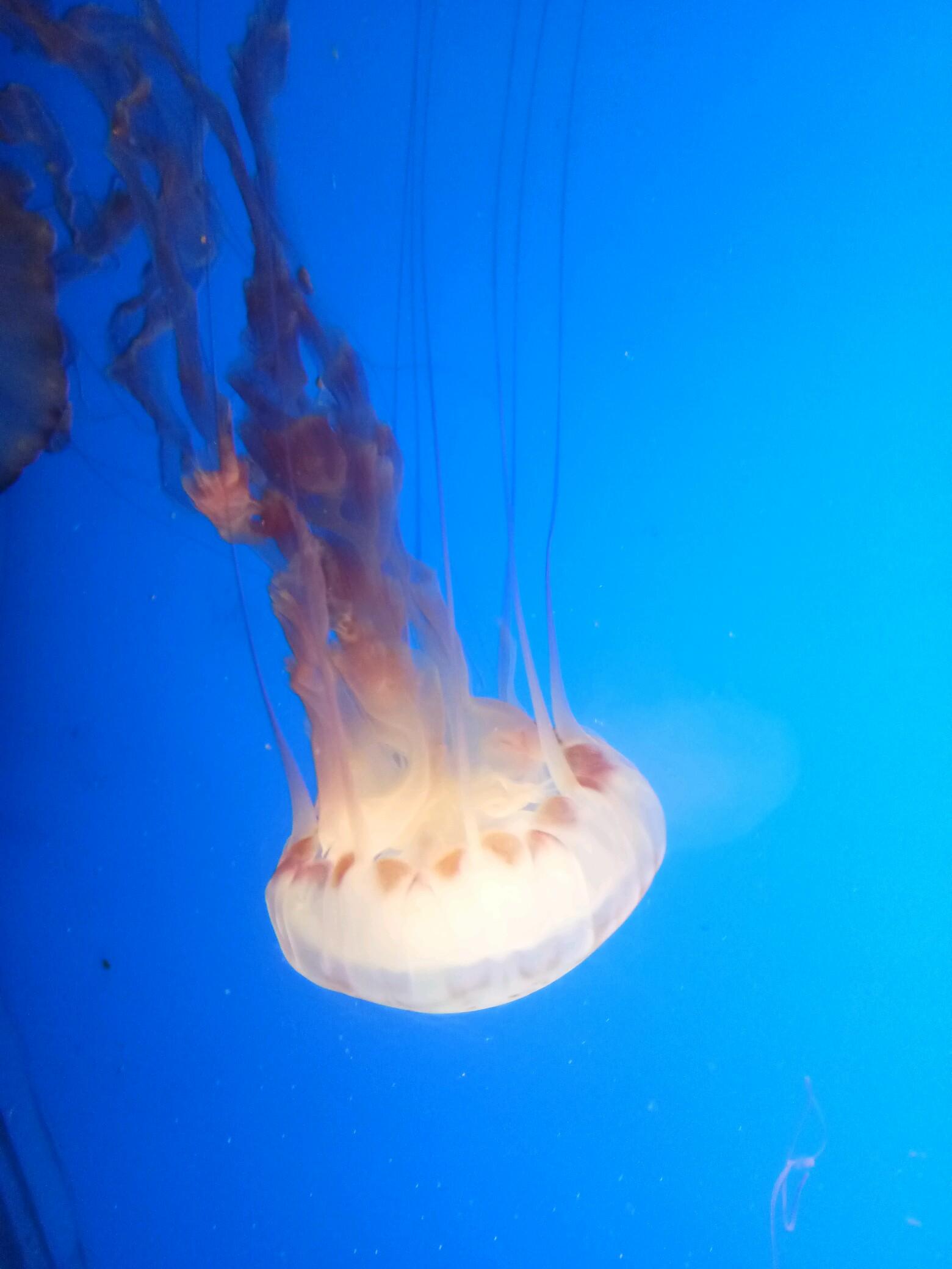 海底世界―水母