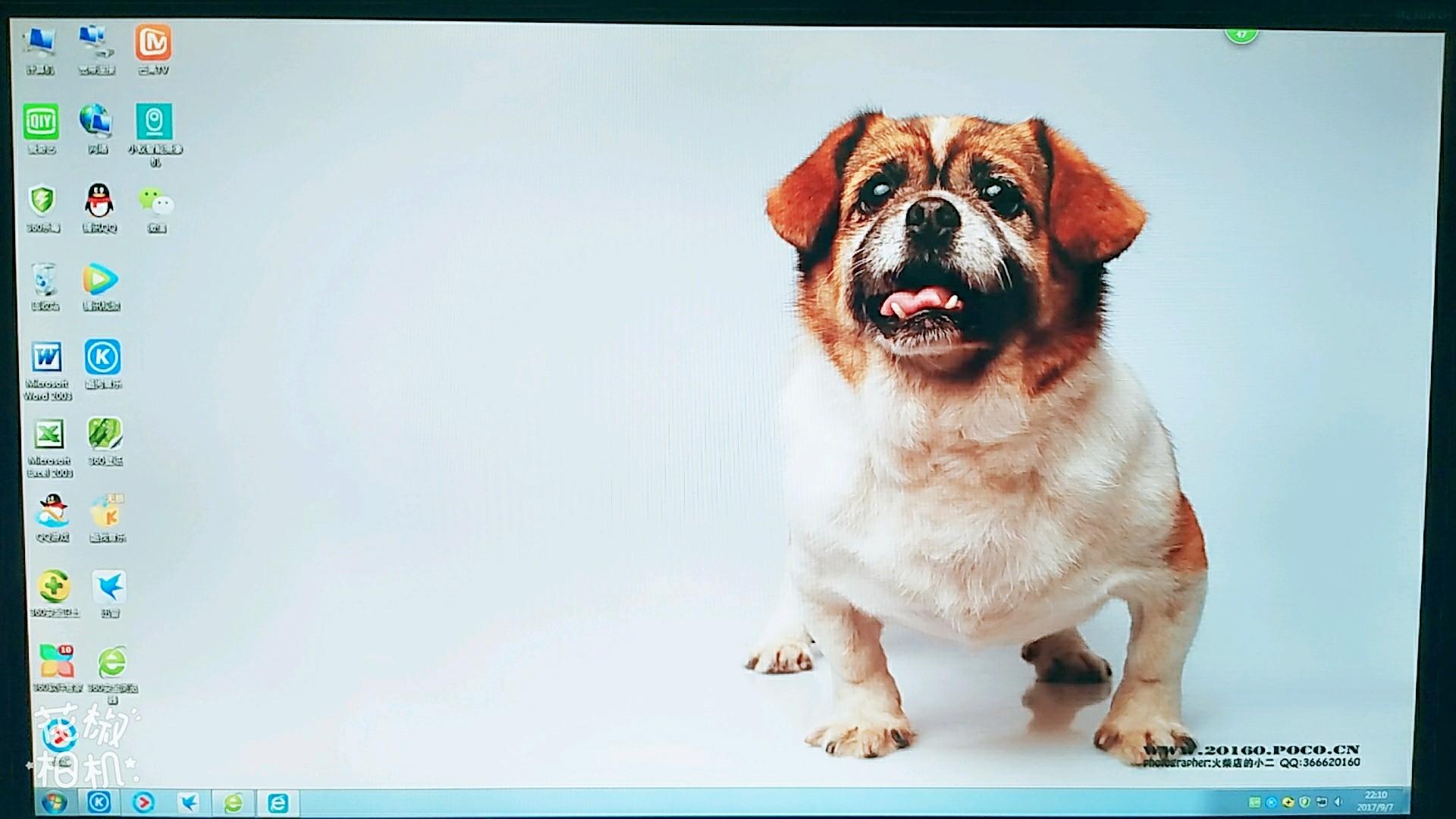 可爱萌宠小狗壁纸