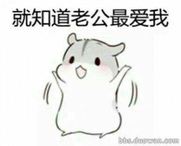 最可爱的仓鼠表情包,咳咳咳,不要介意