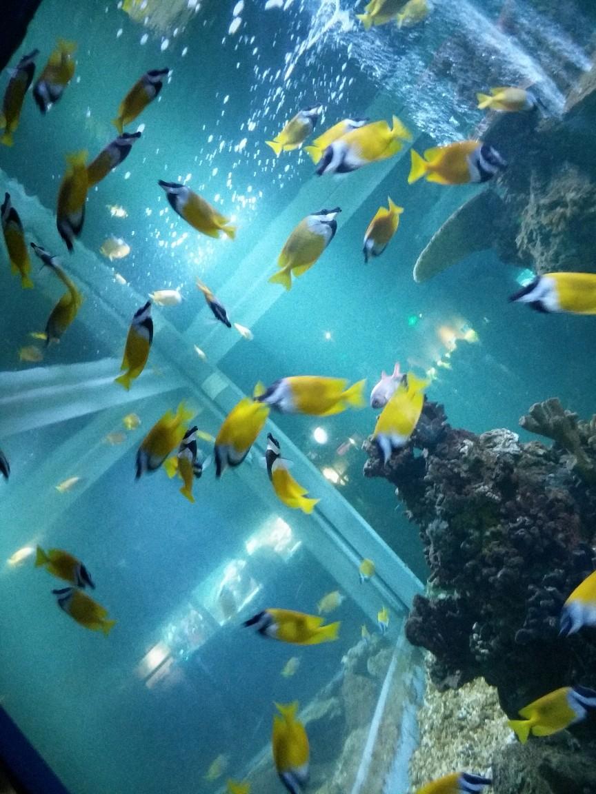 海底世界简笔画水彩