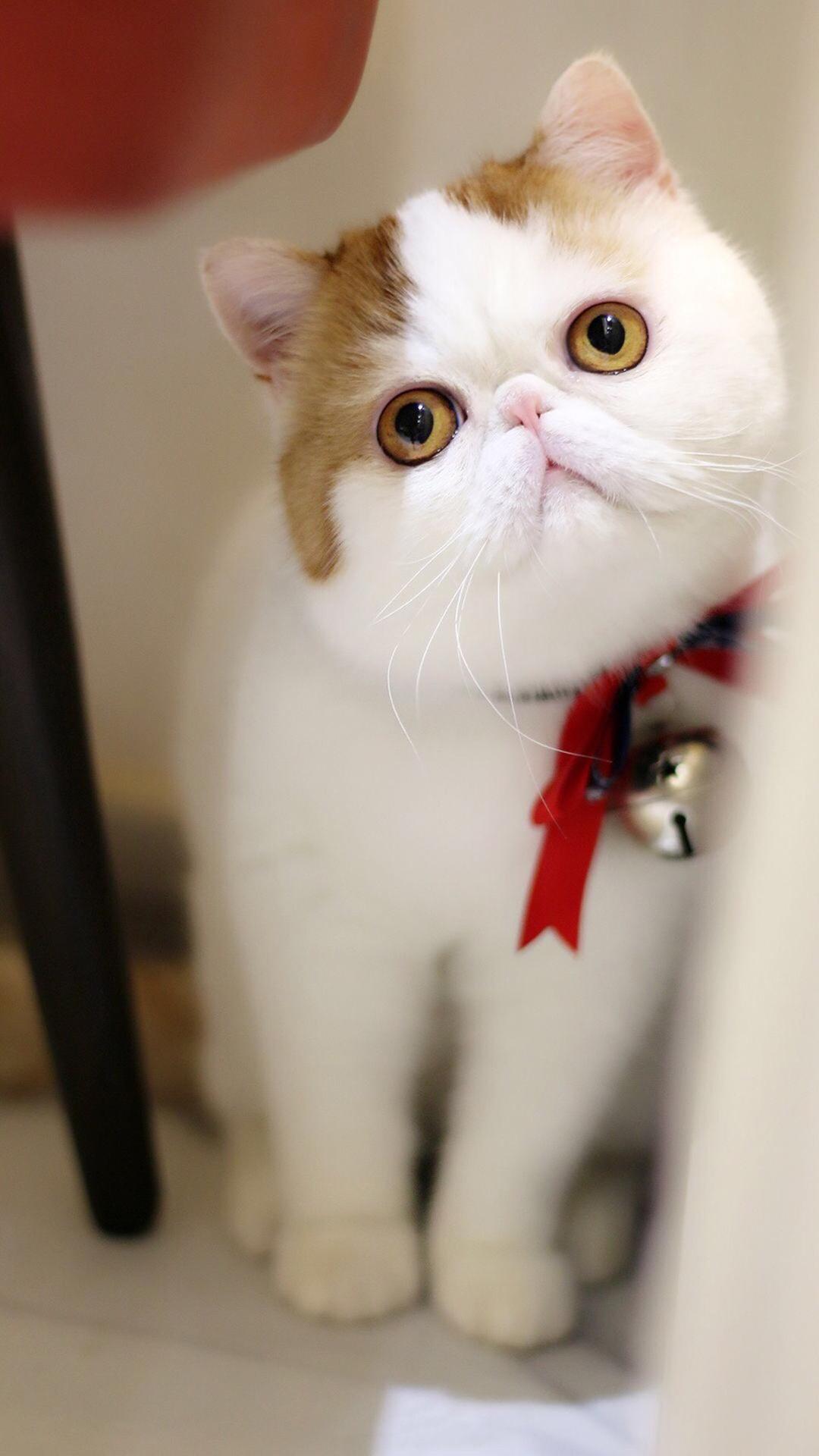 【v粉壁纸】可爱的胖猫咪【9p】
