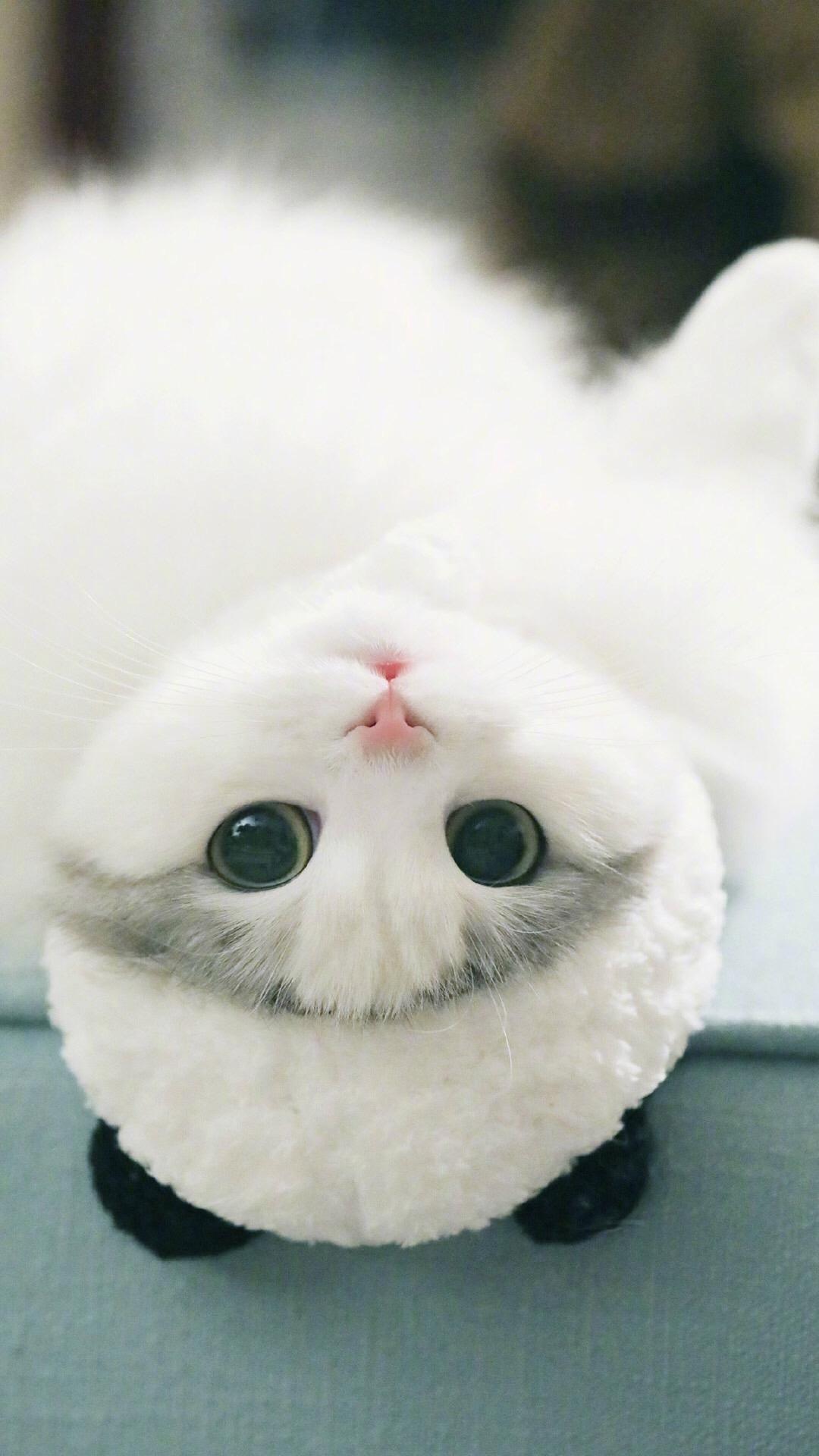 【v粉壁纸】萌萌可爱的小猫咪【9p】