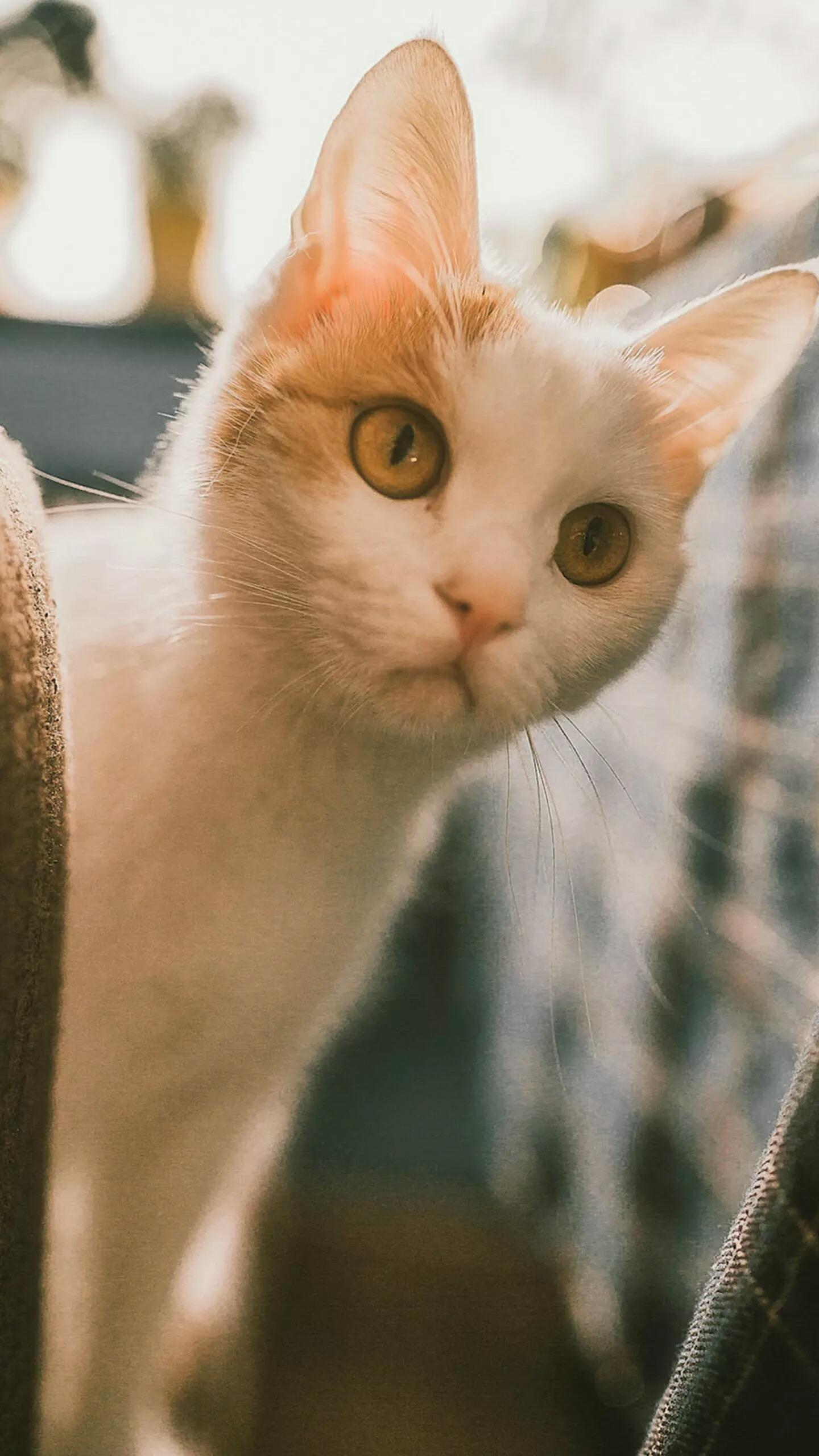 【v粉壁纸】萌萌小动物