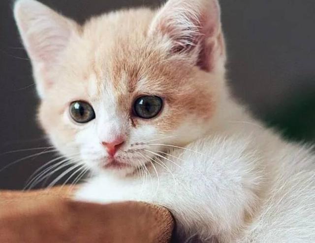壁纸 动物 猫 猫咪 小猫 桌面 640_493