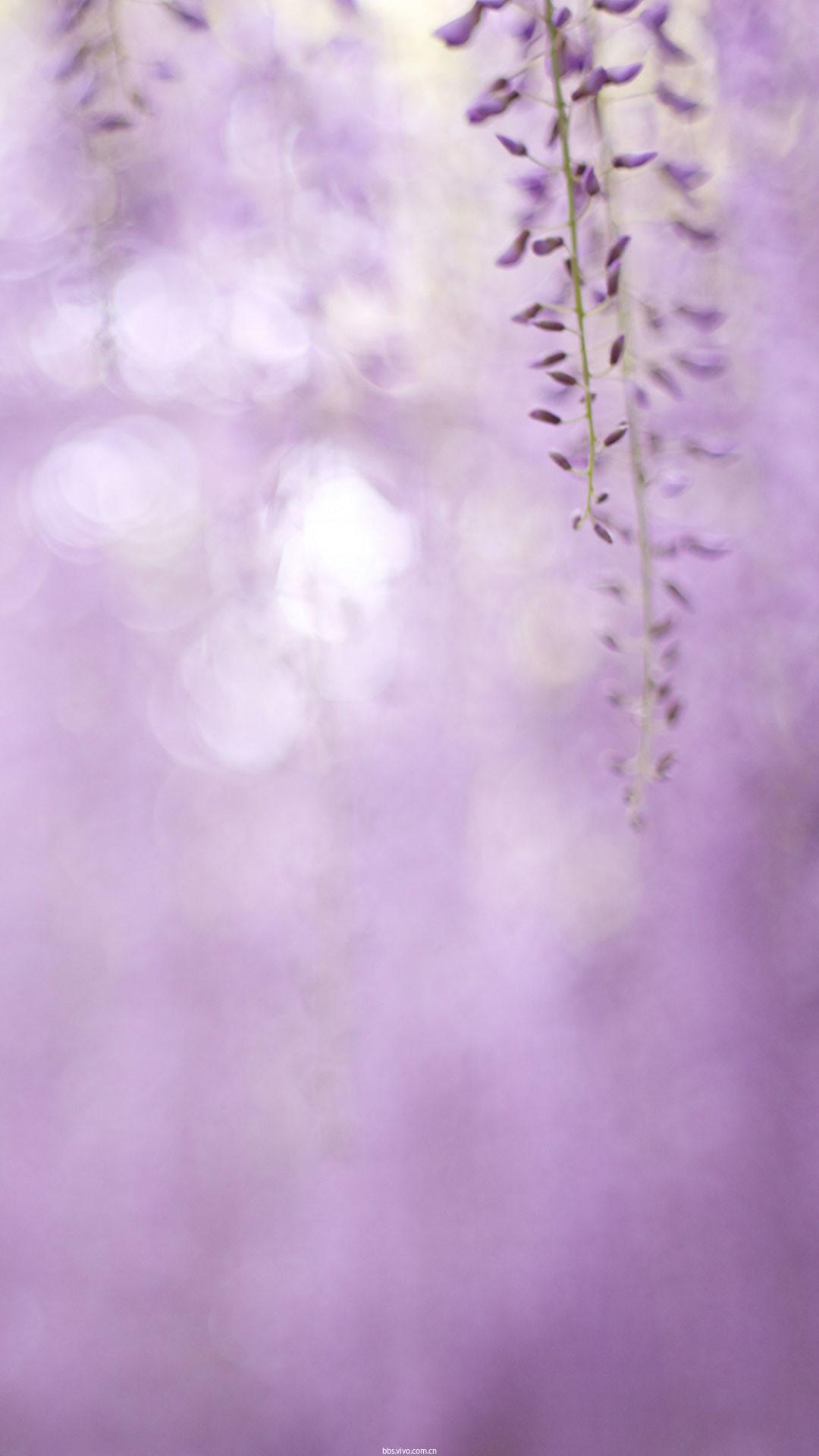 【v粉主题素材壁纸】淡紫色丁香花9p