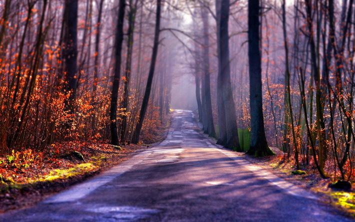 〔v粉主题素材壁纸〕唯美森林树木风景