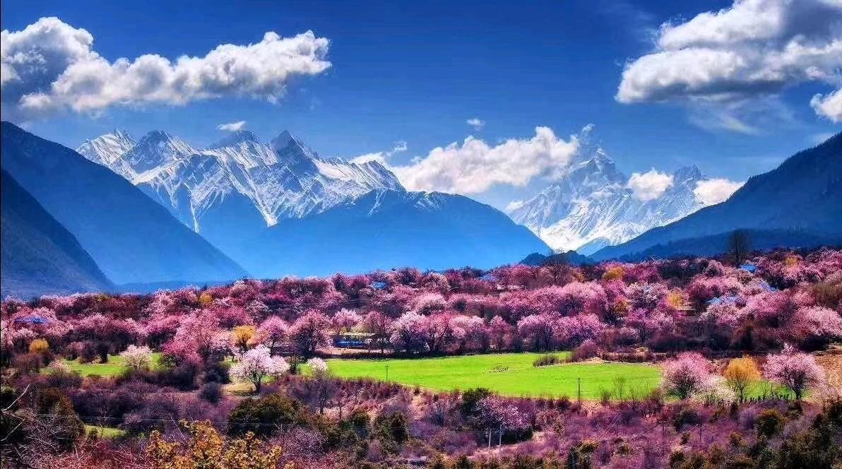 林芝桃花节,你前世今生的缘分天空