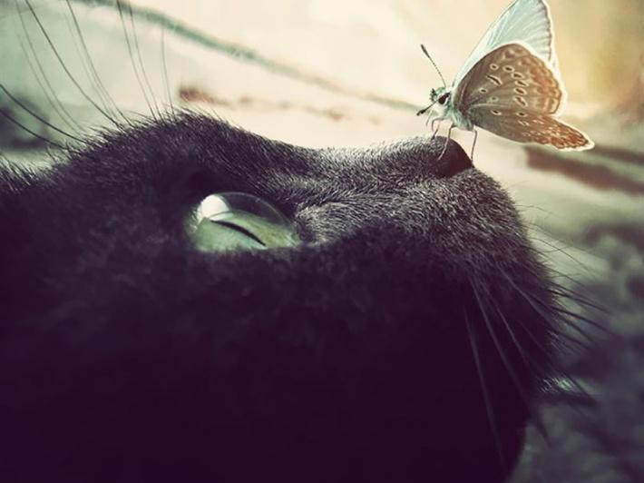 〔v粉主题素材壁纸〕可爱的动物