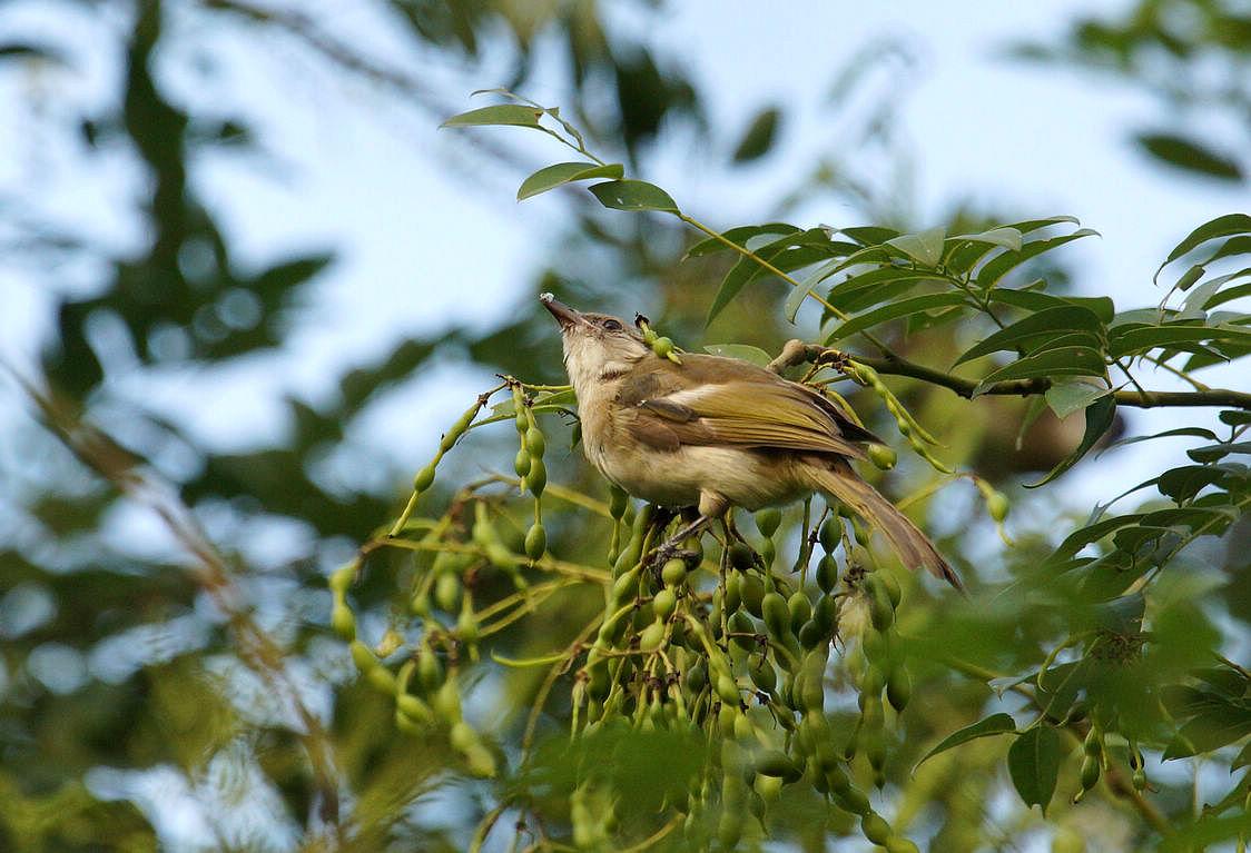 小鸟欢快的唱起歌来,春天来了