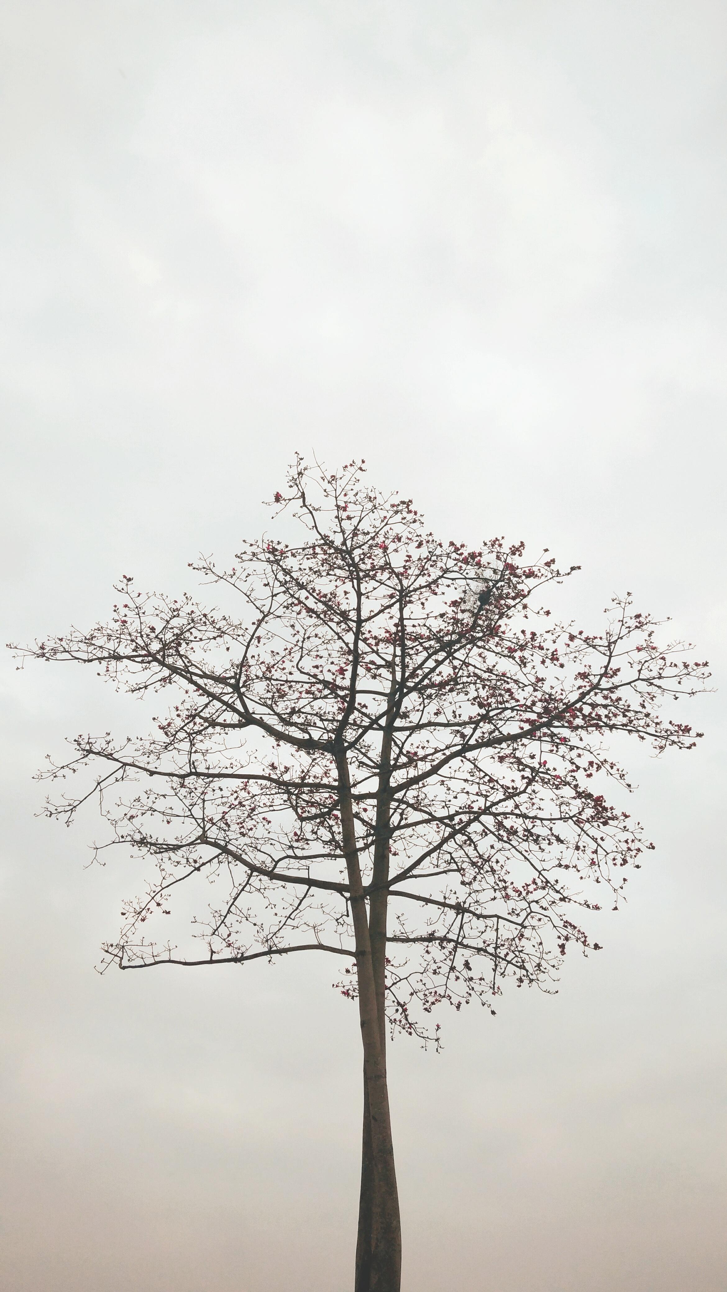 木棉花的春天