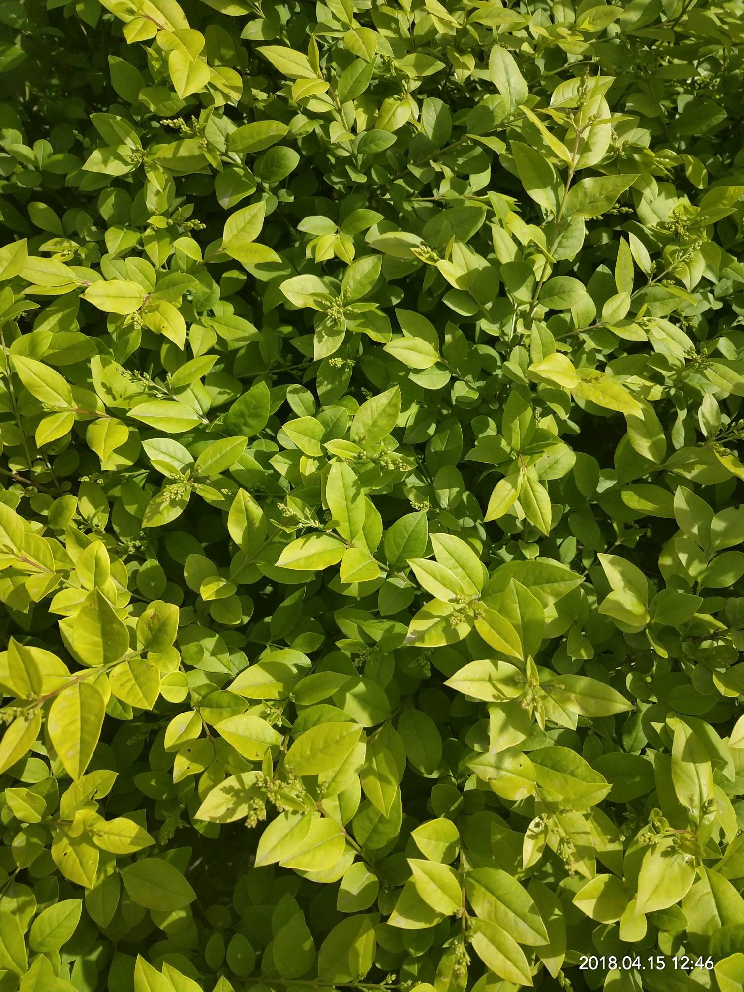 阳光春天绿叶