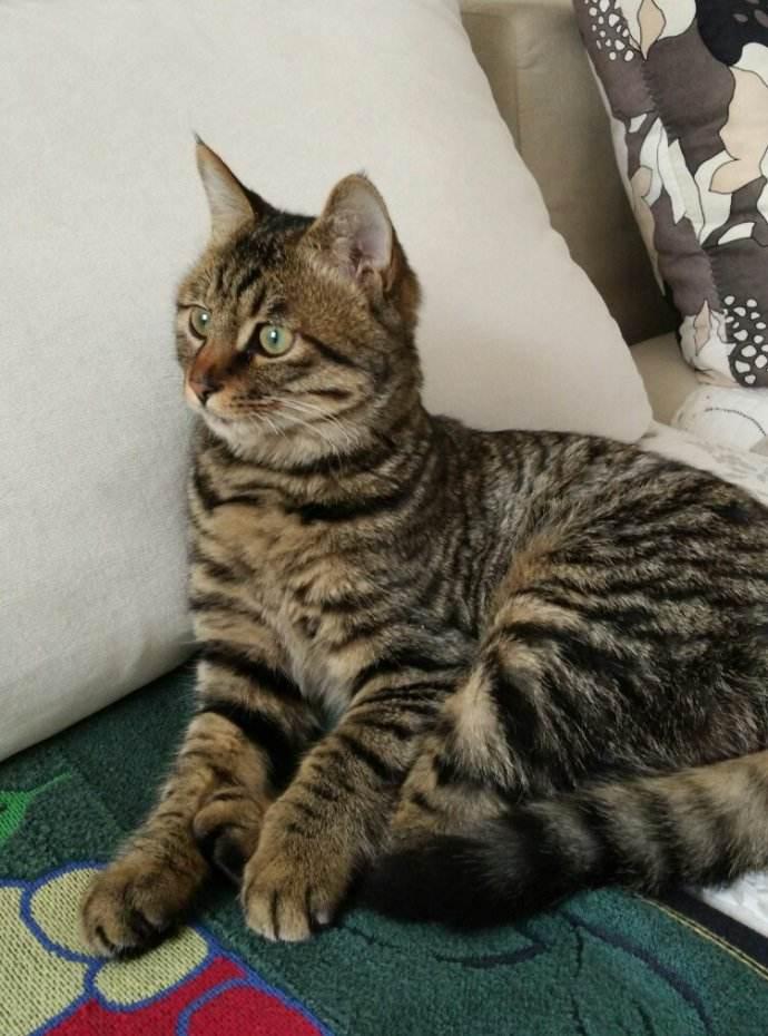 我最喜欢的动物就是猫咪他那可爱的萌萌爪子和敏捷的动作非常的