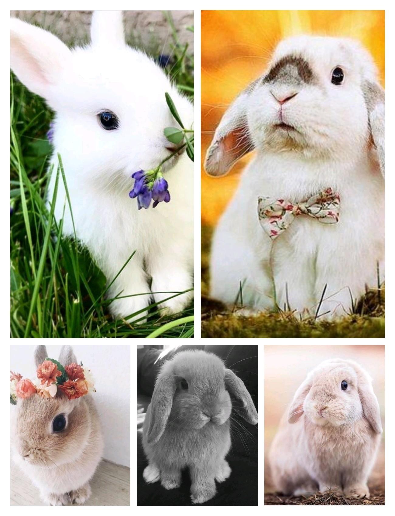 《v粉主题素材》萌萌哒小兔子