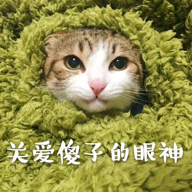 猫咪小可爱说:我胡汉三又来啦,…….