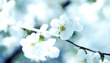 【摄影达人·Xshot】樱花