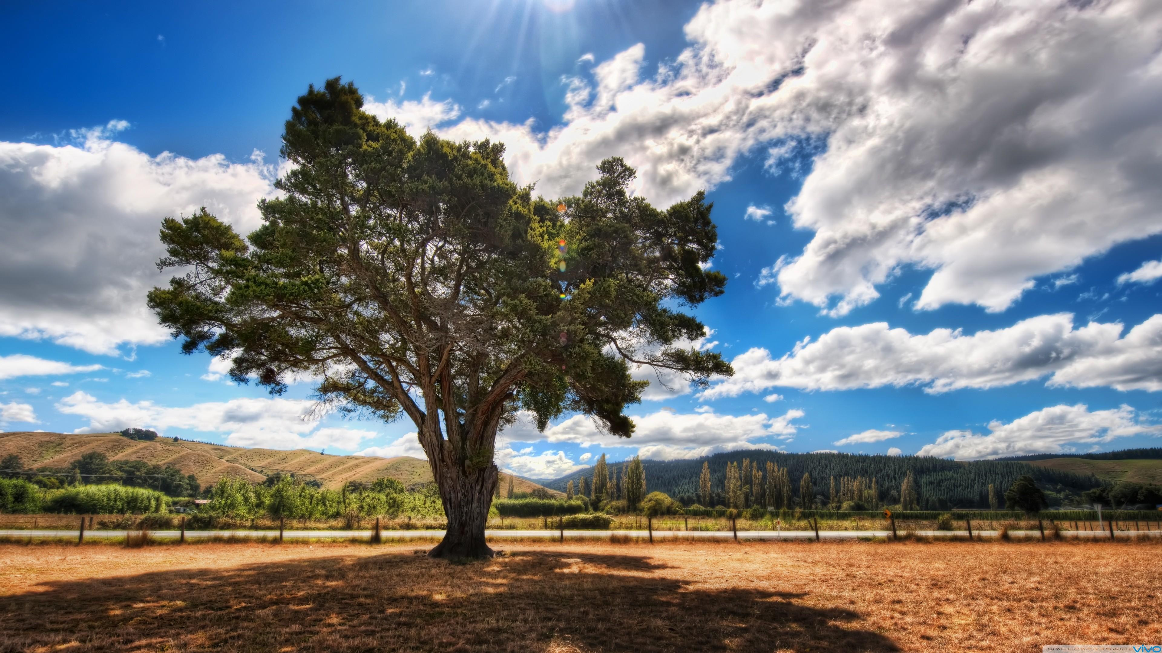 solitary_tree_3-wallpaper-3840x2160.jpg