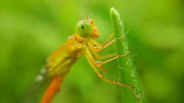 【摄影达人·Xshot】豆娘·蜻蜓